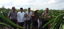 Pertanian di Kalampangan Bisa Jadi Agro Wisata