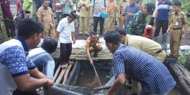 Walikota Panen Perdana Lele Dumbo di Kelurahan Marang