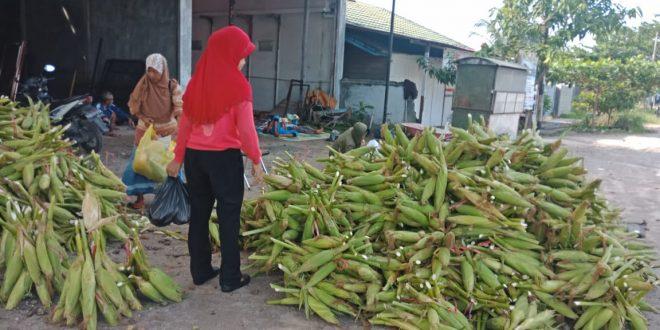 Penjual Jagung di Palangka Ramai Menjelang Pergantian Tahun