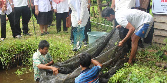 Kelompok Usaha Bersama (Kube) Panen Ikan Patin