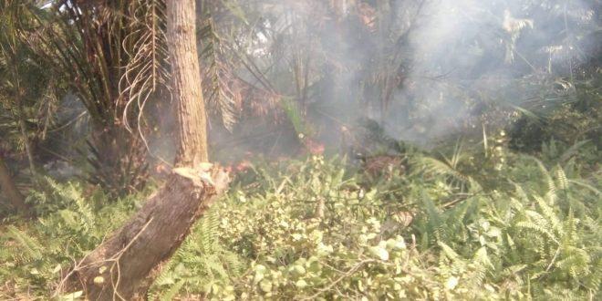 Kalampangan dan Mahir Mahar Wilayah Rawan Kebakaran Lahan