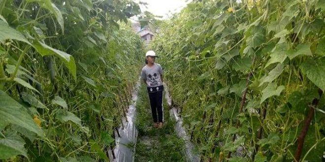 Kelurahan Pager Cocok Buat Tanam Sayur dan Buah