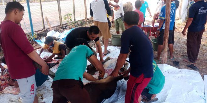 BKKBN Bagikan 1.200 Paket Daging Kurban