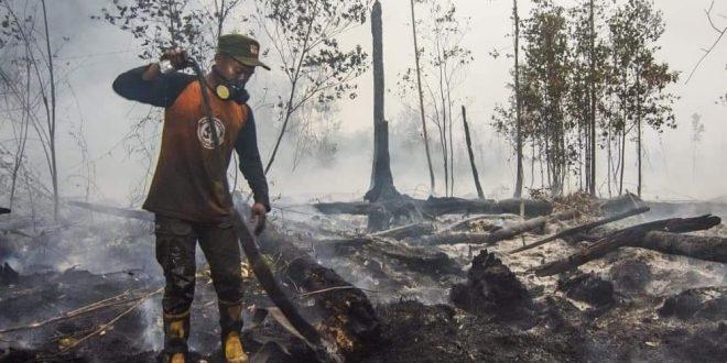 125 Ha Wilayah Taman Nasional Sebangau Terbakar