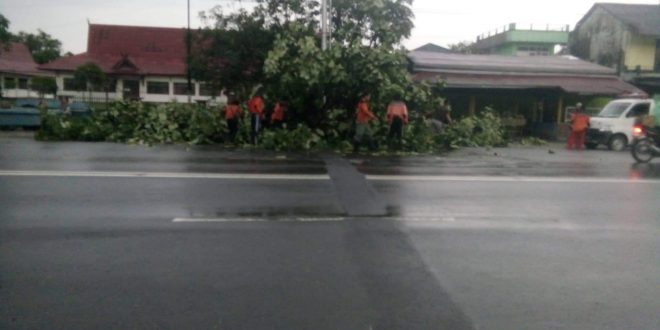 Hujan Deras Disertai Angin Sebabkan Pohon Tumbang