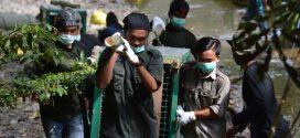 Tiga Orangutan Hasil Repatriasi Pulang ke Habitatnya di Taman Nasional Bukit Baka Bukit Raya