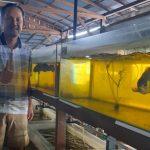 Jenis Ikan Hias Dari Sungai Di Kalteng Diminati Mancanegara