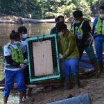Orangutan Repatriasi dari Thailand Dilepasliarkan ke Hutan Lindung Bukit Batikap
