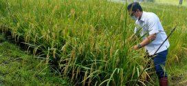 Distan Fasilitasi Pengujian Kesuburan Tanah