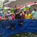 KUB Kelurahan Banturung Panen Ikan Lele Sistem Bioflok